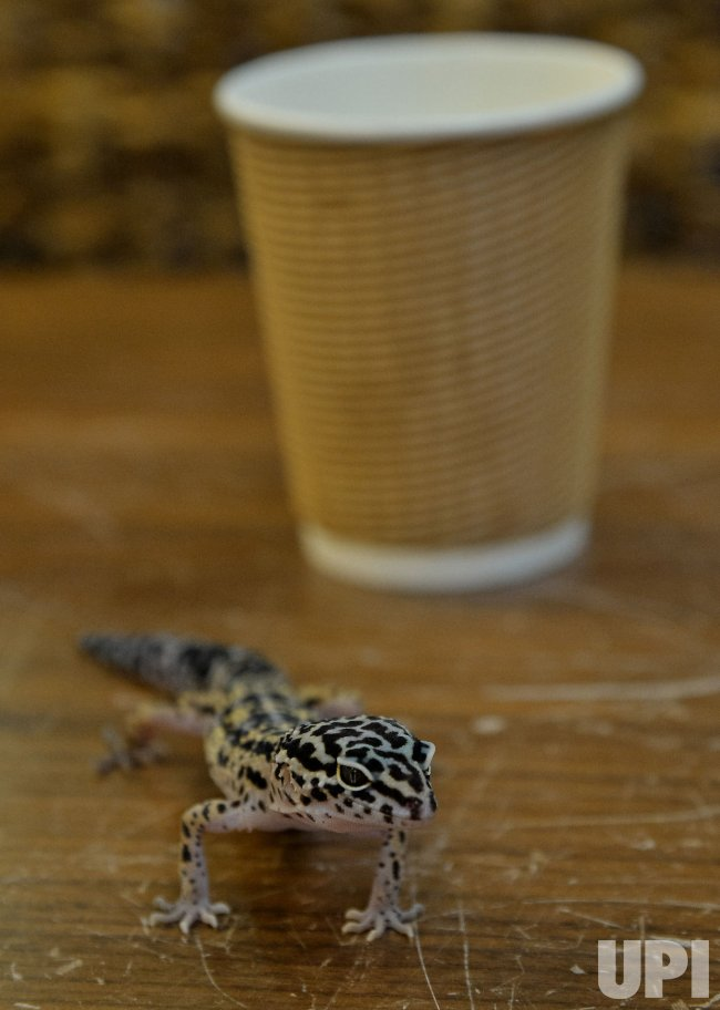 Patrons Enjoy Reptiles at the Reptiles Cafe in Tokyo