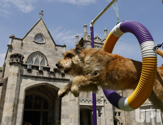 Preview for the 145th Annual Westminster Kennel Club Dog Show