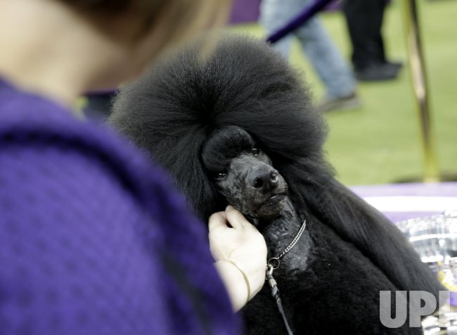 144th Annual Westminster Kennel Club Dog Show in New York