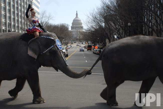 RINGLING BROTHERS CIRCUS PACHYDERM PARADE IN WASHINGTON