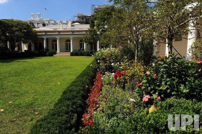 Rose Garden Flowers Bloom At White House In Washington Upi