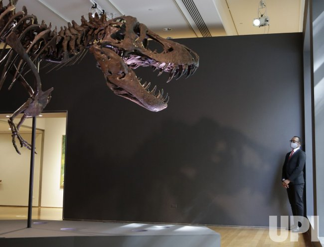 Christie's to Offer a Tyrannosaurus Rex in New York