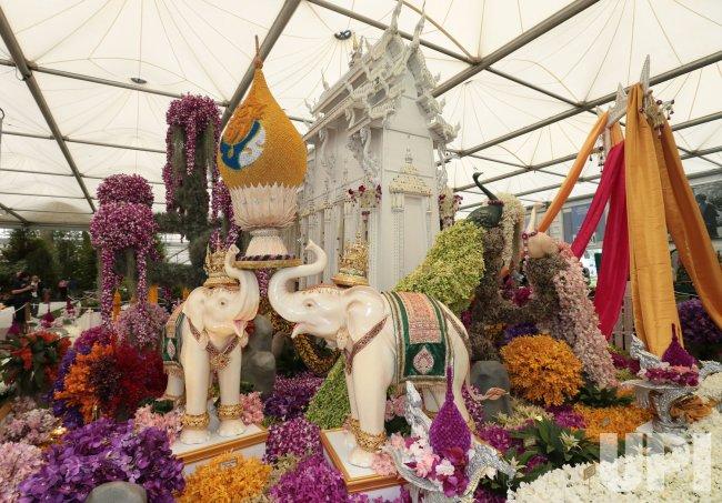 An Orchid garden at Chelsea Flower Show 2013