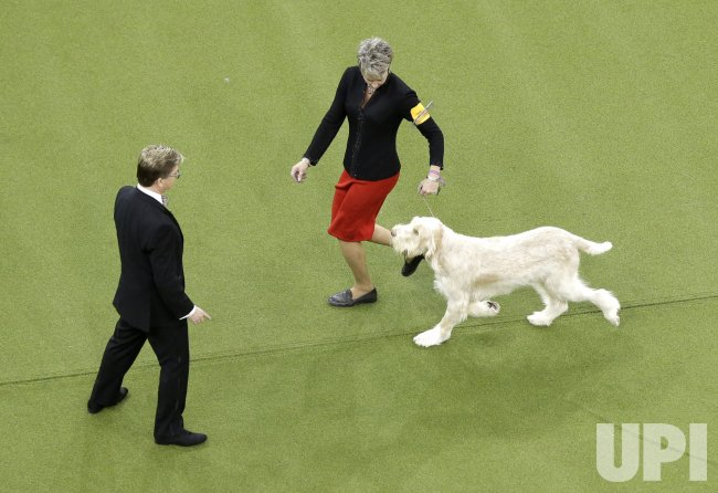 143rd Annual Westminster Kennel Club Dog Show in New York
