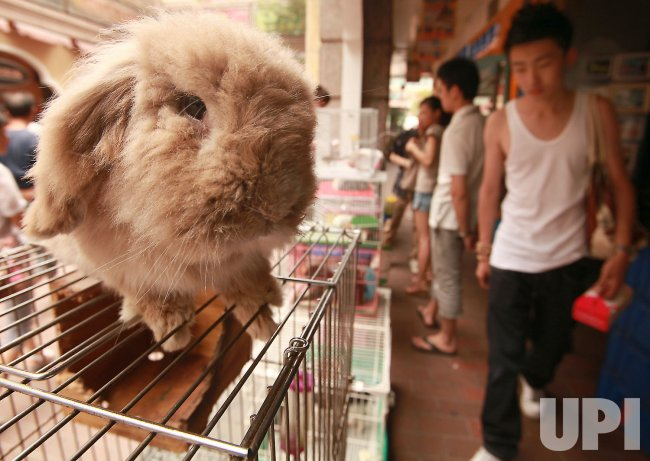 A rabbit is for sale in Beijing
