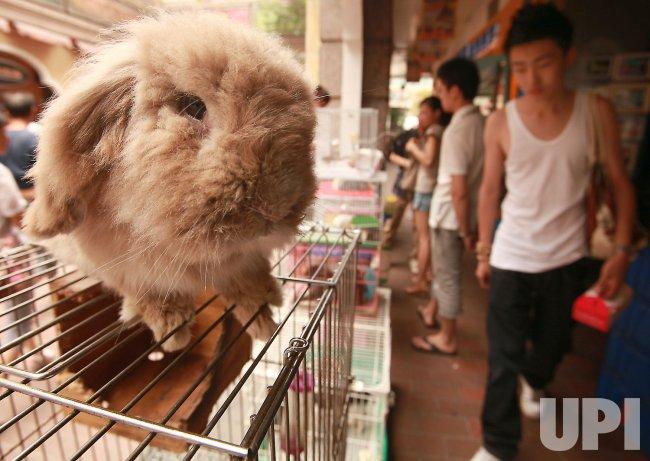 A rabbit is for sale in Beijing