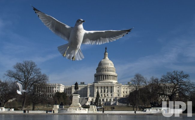 The Capitol Reflecting Pool is Frozen in Washington, D.C.
