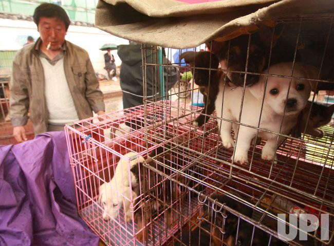 Puppies in cages (sold for food) are on sale in Lijiang