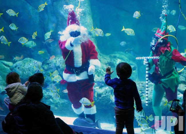 Santa Clause Practices Diving For Holidays At Aquarium
