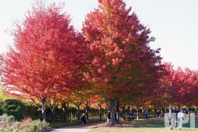 People Come Out To See Fall Colors In St. Louis