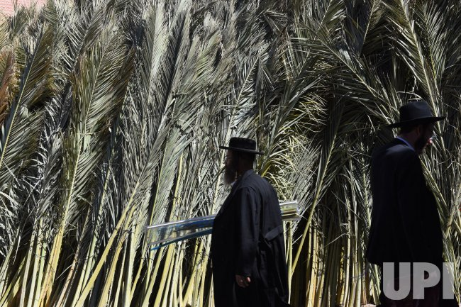 Ultra-Orthodox Jews Pass Palm Branches For Sukkot In Jerusalem