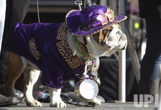 St. Louis Pet Parade