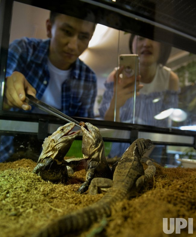 Patrons Enjoy Touching Reptiles at the Reptiles Cafe in Tokyo