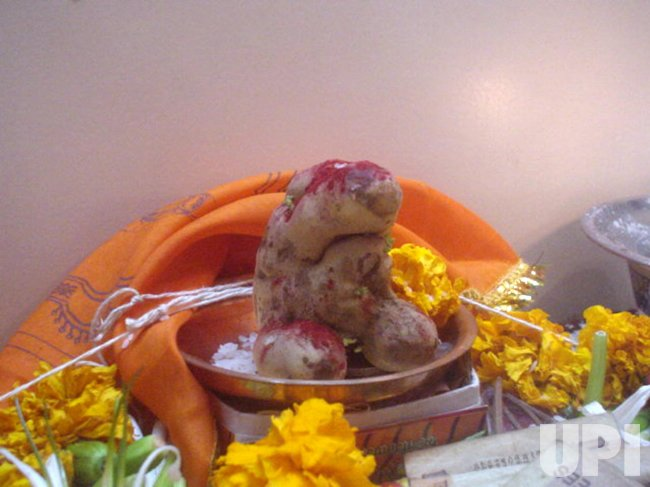 Hindus worship Ganesh-shaped potato
