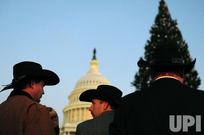 The Capitol Christmas Tree in Washington - UPI.com