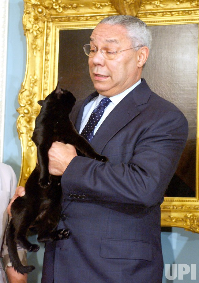"""""""COLIN POWELL"""" WINS CAT OF YEAR"""