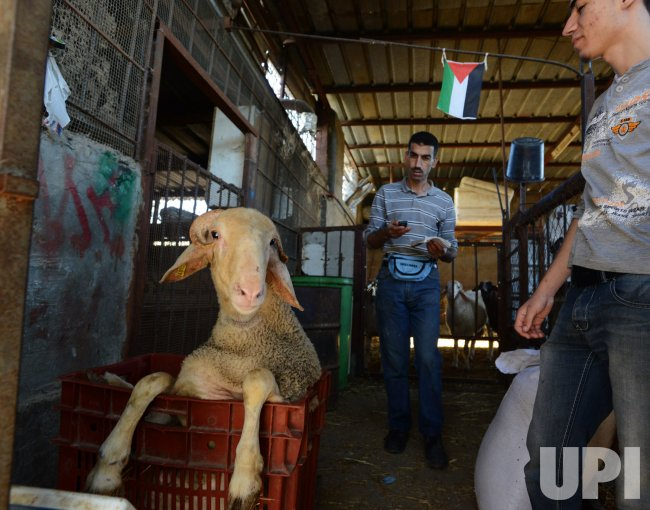 Palestinian Muslims Sacrifice Sheep On Eid Al-Adha, West Bank