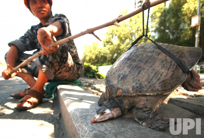 Chinese man sells a turtle in Beijing