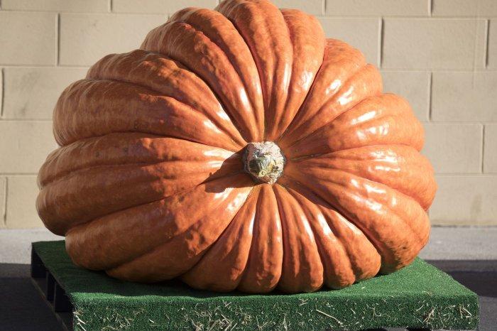Pumpkins focus of fall festivities