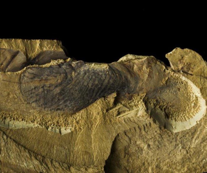 Earth's earliest animals: Strange sea creatures millions of centuries ago