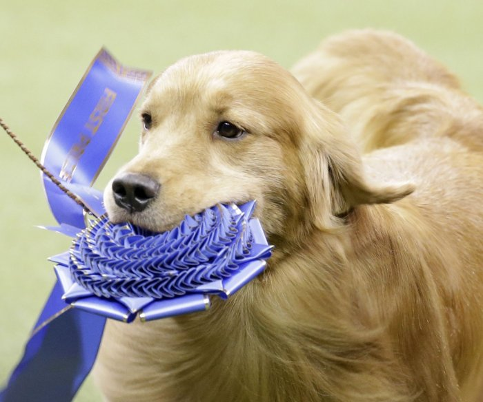 Moments from the 2020 Westminster Dog Show