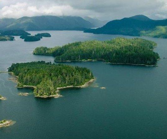 UPI News Quiz: a rogue planet, land for logging, COVID-19