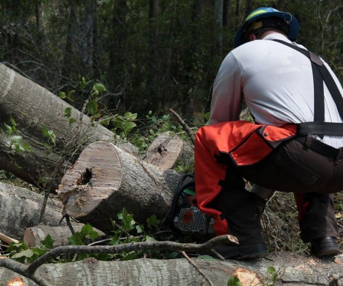 U.S. proposes rules to allow faster destruction of national forests