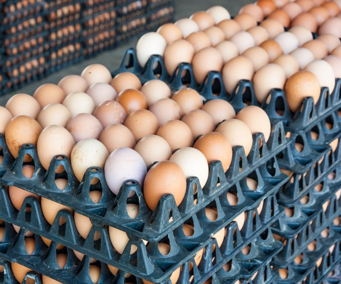 FDA allows food service eggs to be sold in stores to meet surging demand
