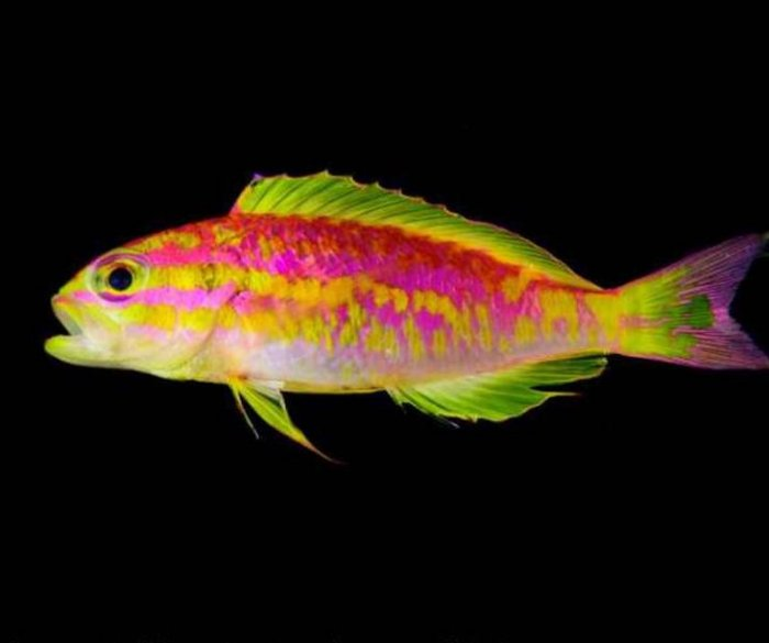 New small, neon fish species discovered