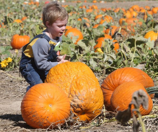 Pumpkin patch shows off strong growing season