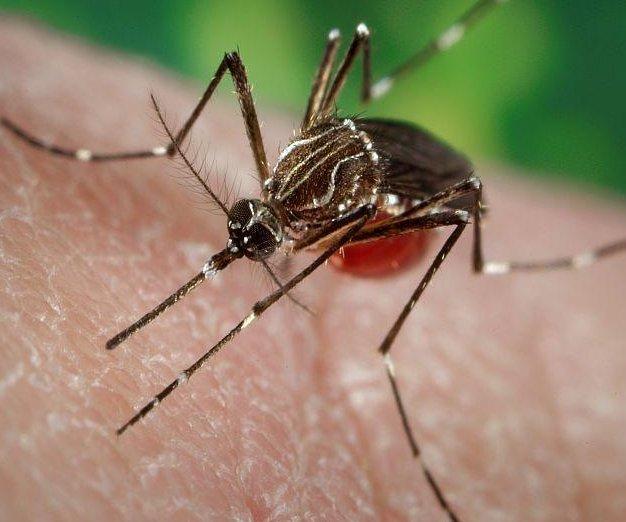Sound the mosquito alarm, across the USA
