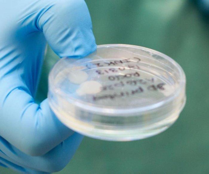 Scientists generate cartilage tissue using a 3D bioprinter