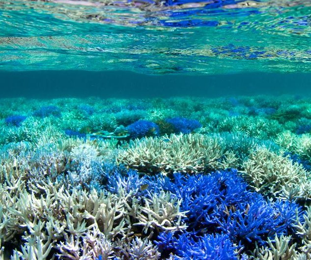 U.S. aquariums try to save Florida corals as disease spreads