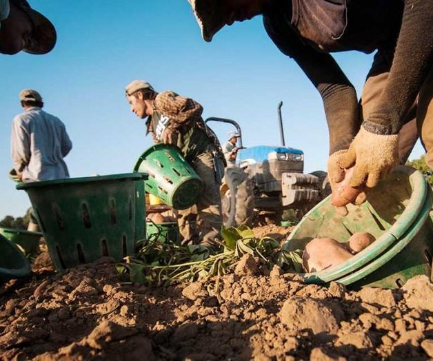 New trade deal good for some U.S. farmers, but produce growers wary