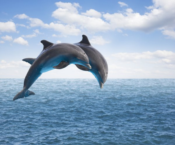 Dolphins show they can cooperate to solve problems