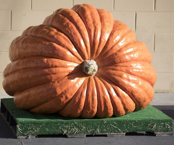 Pumpkins focus of fall festivities