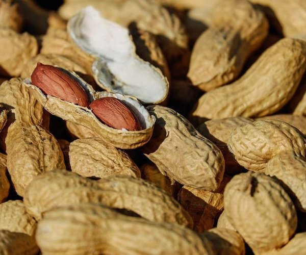 Immunotherapy for peanut allergy safe, effective in clinical trial