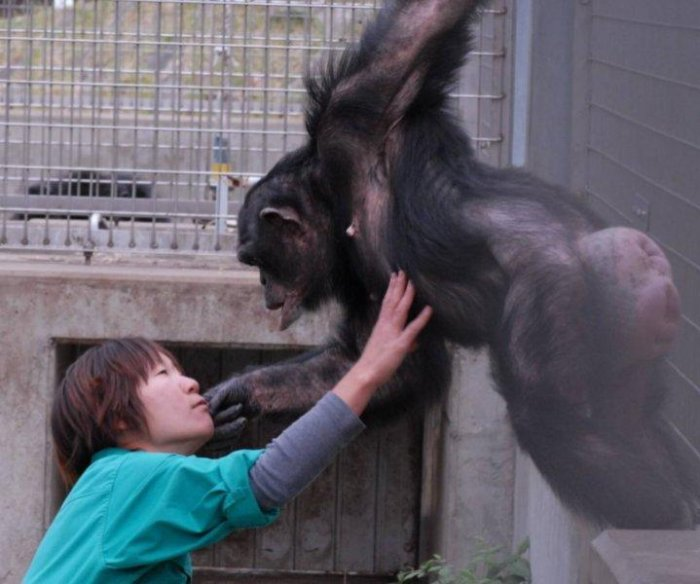 Second chimp diagnosed with Down syndrome-like disorder