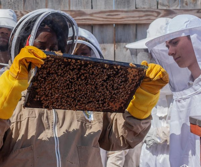 Beekeeping sweetens depressed economy in coal country