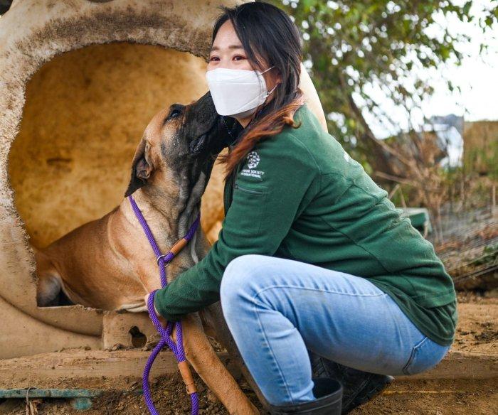 South Korean dog meat farms closing as attitudes change