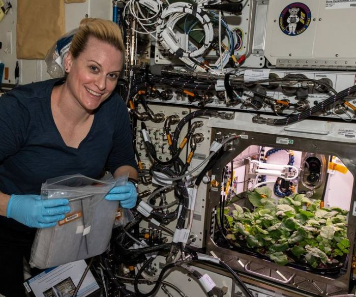 Printable steak, insect protein, fungus among space food idea winners