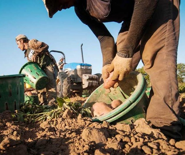 Farmers celebrate proposed changes to nation's migrant farmworker program