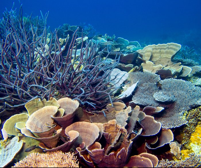 Coral parents pass algae to their offspring to help cope with climate change