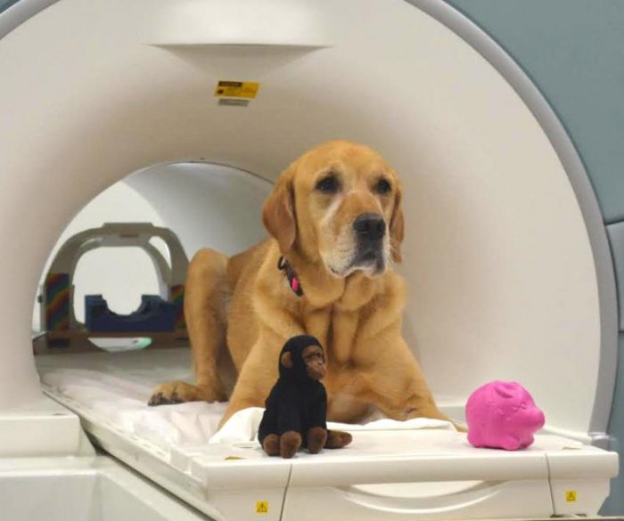 Scientists probe how dogs process words