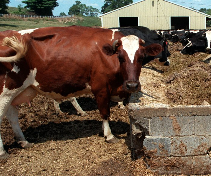 Dairy exports hindering U.S.-Canada trade deal