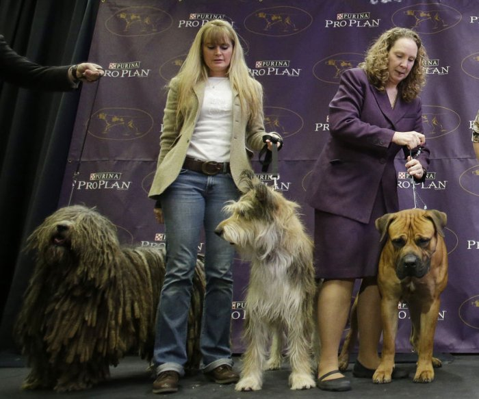 Westminster Kennel Club's new competitors