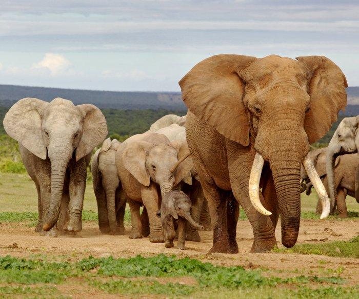 Trump reconsidering elephant trophy ban reversal