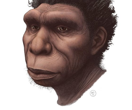 Newly named species of early human could help explain evolution gaps