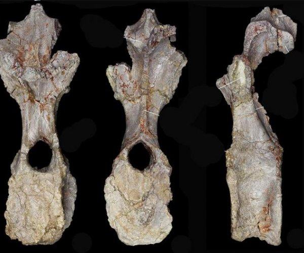 Scientists find new dinosaur species in Morocco mountains