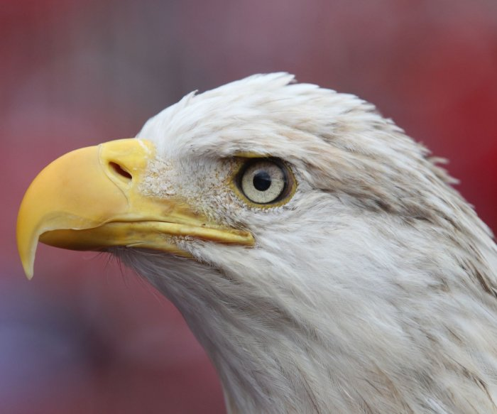 15 charged with trafficking eagles, other protected birds